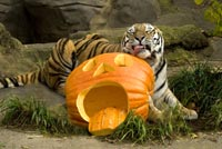 Mikhail_with_pumpkin