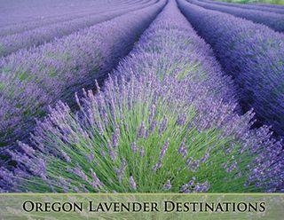 Lavender-row
