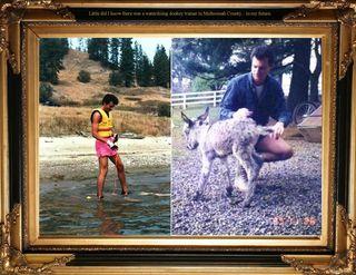 Waterskiing donkey trainerjpeg