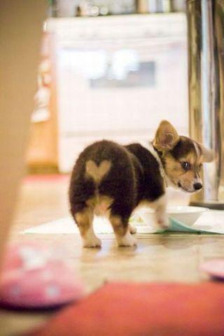 So-cute-animals41
