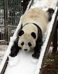Panda on slide