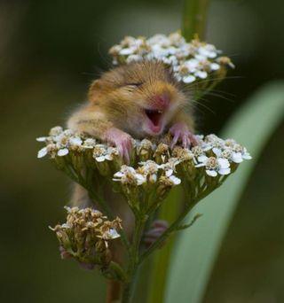 Joyful hamster