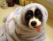 Towel dog