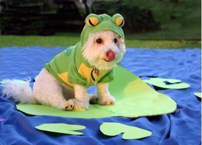 Frog_dog