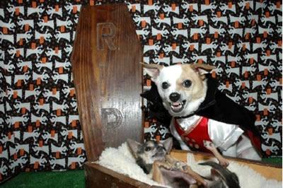 Vampire_dog