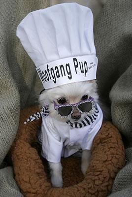 Wolfgang_pup
