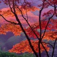 Japanese_gardens_3