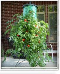 Tomato_planter